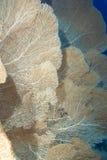Una colonia de ventiladores de mar gigantes Foto de archivo libre de regalías