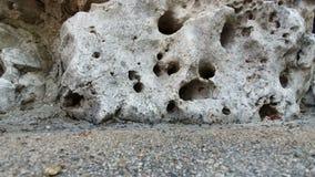 Una colonia delle formiche nere che si muovono rapidamente contro il contesto dei nascondigli nella roccia in cui vivono archivi video