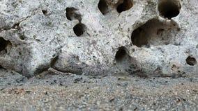 Una colonia delle formiche nere che si muovono rapidamente contro il contesto dei nascondigli nella roccia in cui vivono stock footage