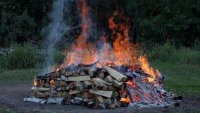 Una combustione del fuoco nella foresta video d archivio