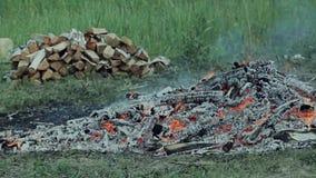 Una combustione del fuoco nella foresta stock footage