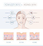 Una comparación más joven y más vieja de la piel