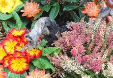 Una composizione dei fiori Fotografia Stock Libera da Diritti