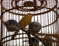 Una condizione dell'uccello su un legno islocked in una gabbia fotografie stock