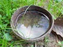 Una copertura della noce di cocco ha acqua Induce la zanzara a fare le uova che causano lo scoppio delle dengue in Tailandia fotografia stock libera da diritti