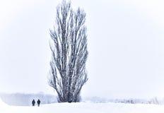 Una coppia accanto all'albero di KEN e di Maria immagine stock libera da diritti