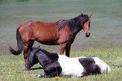 Una coppia di cavalli nel lago gli shan delle montagne tien Fotografia Stock Libera da Diritti