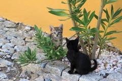 Una coppia di gattini con il nero e una pelliccia colorata Fotografie Stock Libere da Diritti