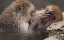 una coppia di macachi giapponesi durante la presa del bagno dentro onsen Fotografia Stock Libera da Diritti