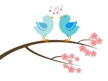 Una coppia di uccelli di canto Fotografia Stock Libera da Diritti