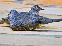Una coppia di uccelli su una scena romantica in natura immagini stock