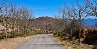 una coppia di viandanti maschii all'estremità di una strada asfaltata in mezzo alla campagna con due linee di albero senza foglie fotografia stock