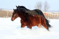 Una coppia i cavalli Fotografia Stock