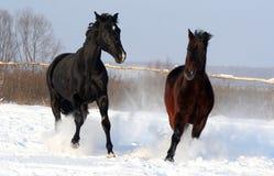 Una coppia i cavalli Immagini Stock Libere da Diritti