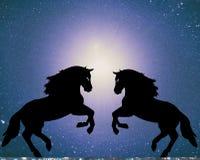 Una coppia i cavalli innamorati Fotografia Stock