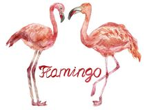Una coppia i fenicotteri rosa dell'acquerello che si affrontano illustrazione di stock
