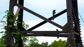 Una coppia le gazze che si siedono sui fasci arrugginiti del metallo di torre Fotografia Stock Libera da Diritti