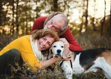 Una coppia senior con un cane in una natura di autunno al tramonto fotografia stock libera da diritti