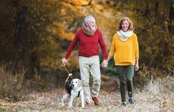 Una coppia senior con un cane su una passeggiata in una natura di autunno immagine stock libera da diritti
