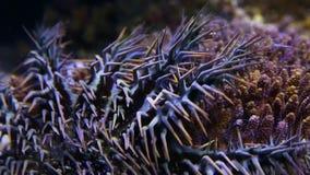 Una corona de throns en un acuario metrajes