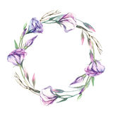Una corona dell'isolato del fiore di eustoma dell'acquerello su backgroun bianco Immagini Stock Libere da Diritti