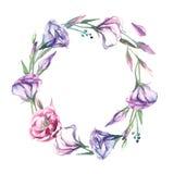 Una corona dell'isolato del fiore di eustoma dell'acquerello su backgroun bianco Immagine Stock