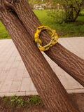 Una corona si trova sull'albero Fotografie Stock Libere da Diritti