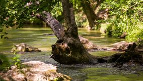 Una corrente calma di un fiume della montagna e un gioco di luce archivi video