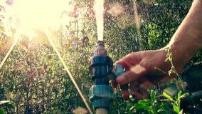 Una corrente di acqua da una luce del sole dello spruzzatore tramite la nuova videoripresa di vista della natura di qualità delle video d archivio