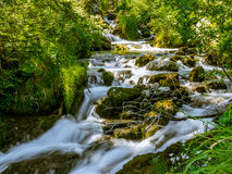 Una corrente selvaggia nelle foreste nelle alpi svizzere Immagine Stock
