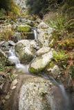 Una corriente Córcega de la montaña Fotografía de archivo