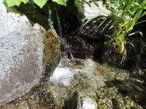 Una corriente conecta en cascada en el rastro de Hannegan en Washington Fotos de archivo libres de regalías