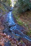 Una corriente de la montaña con corrientes claras traga una colina en una área arbolada Imágenes de archivo libres de regalías