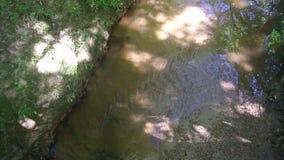 Una corriente del agua en el bosque almacen de metraje de vídeo