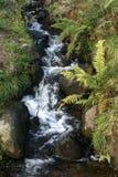 Una corriente del arbolado conecta en cascada helechos e hierba Fotografía de archivo libre de regalías