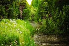 Una corriente en el bosque Imagen de archivo