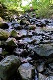 Una corriente en el bosque que fluye entre las piedras entre los arbustos del verde y los árboles Un trago de restauración de la  Fotografía de archivo