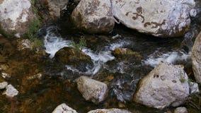 Una corriente pacífica de la montaña en el bosque - 4K metrajes
