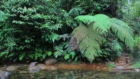 Una corriente por completo del algea rojo y de un río claro en la selva con los helechos coloridos enormes metrajes