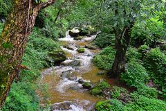 Una corriente que atraviesa el bosque en montañas Himalayan, Uttarakhand, la India Fotografía de archivo libre de regalías