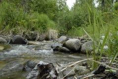 Una corriente rocosa del bosque que fluye imagen de archivo