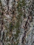 Una corteza de un árbol Imagenes de archivo