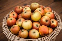 Una cosecha de manzanas frescas en una cesta de mimbre Imagenes de archivo