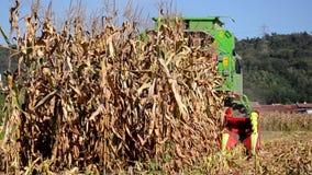 Una cosechadora en un campo de maíz almacen de video