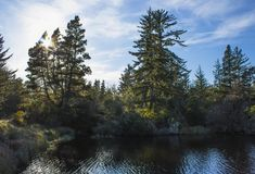 Una costa del fiume della foresta Fotografia Stock