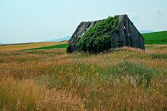 Una costruzione di legno di decomposizione invasa su Rolling Hills fotografie stock libere da diritti