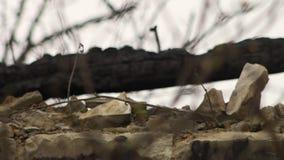 Una crisis en Ucrania almacen de metraje de vídeo