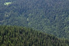 Una cubierta hecha de pinos Imagen de archivo