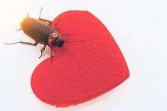 Una cucaracha con concepto rojo del hogar, enfadada o fea del amor imagen de archivo