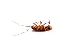 Una cucaracha muerta Fotos de archivo libres de regalías
